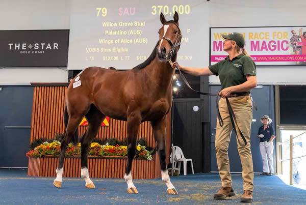 $370,000 Palentino  filly from Wings of Alice.