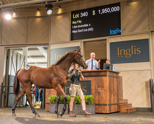 $1.95 million I Am Invincible filly from Hips Don't Lie - image Steve Hart.