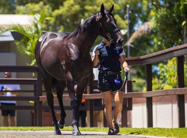 $1.2million I Am Invincible filly from Maastricht.
