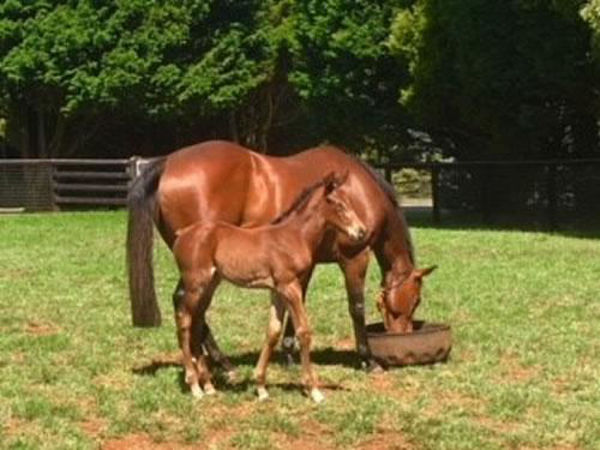 Cinderella as a foal at Milburn Creek