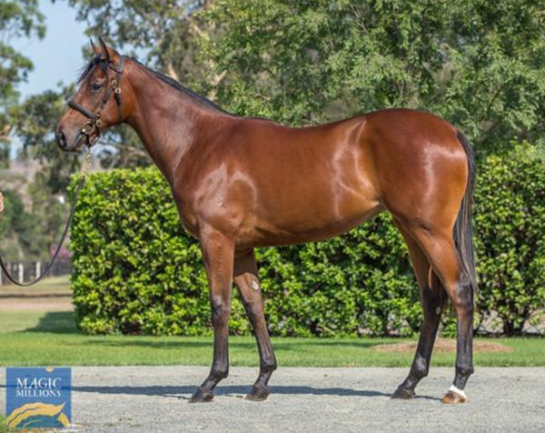 Forever and a Day was a modest $60,000 MM purchase from the Coolmore draft.
