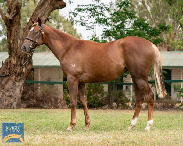 From a great Aga Khan family Four Moves Ahead failed to make her $300,000 reserve as a yearling
