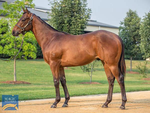 Generation a $575,000 Magic Millions yearling