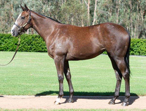 Gstaad as a yearling