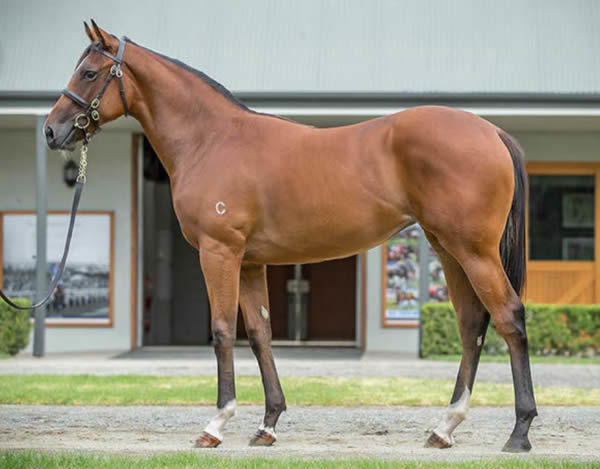 Heavenley Bodied as a yearling