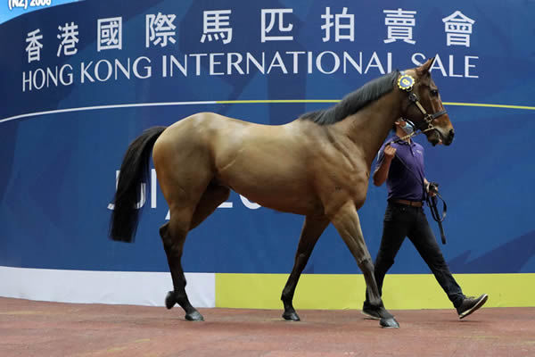 I Am Invincible gelding from Utopia topped the sale.