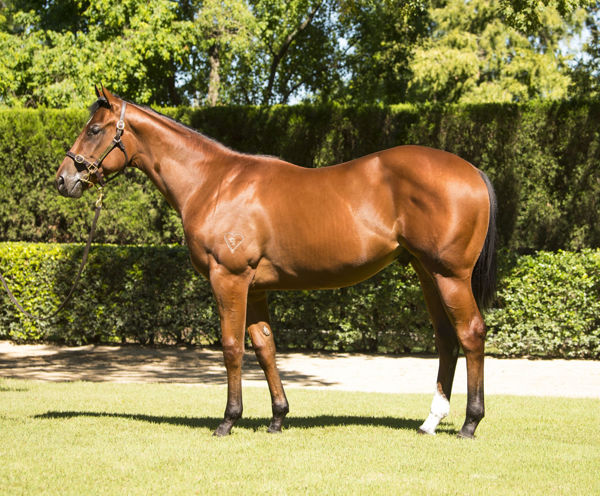 Home Affairs was an $875,000 Inglis Easter purchase.