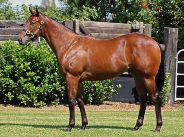 Bought for just $60,000 at Inglis Easter, Hot 'n' Hazy did in fact have four legs as you can see in this picture!