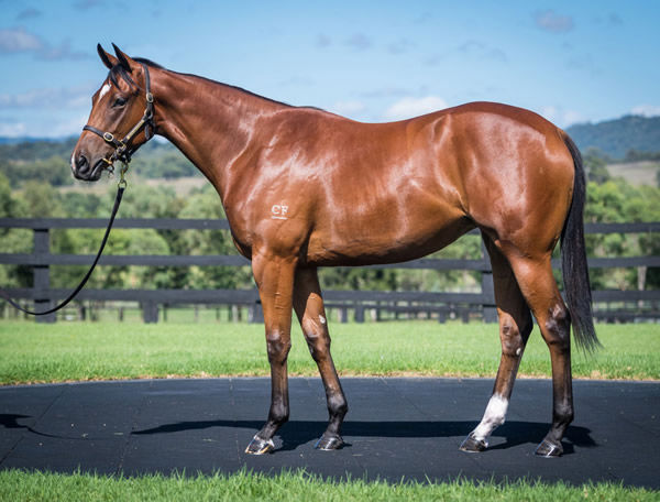 I Am Invincible filly from Listen Here.