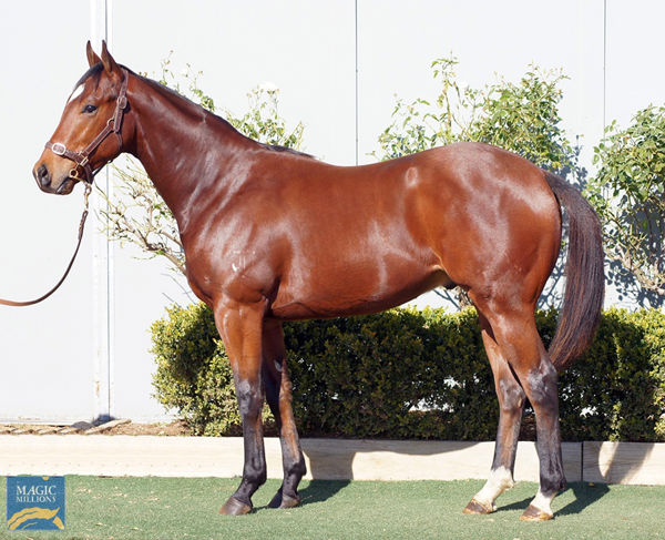 Impending half-brother to My Snow Queen on offer at the National Yearling Sale - click to see his page.