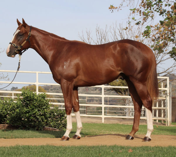 In The Congo a $350,000 Easter yearling