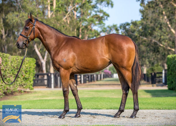 Jazz Etude was a $650,000 Gold Coast yearling