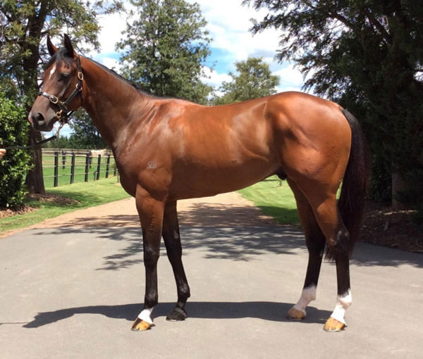 Jet Pack made $325,000 as a yearling and 12 months later $45,000 as a tried horse.
