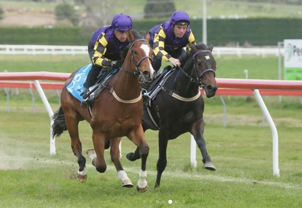 Lot 162 - click to watch his gallop.