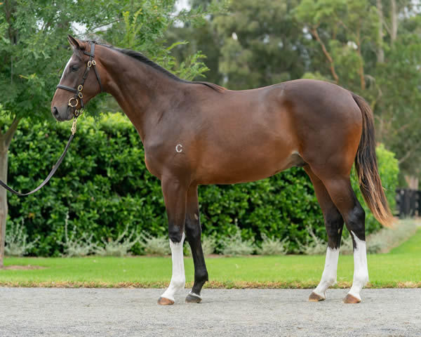 Lot 262 - click to see his page.