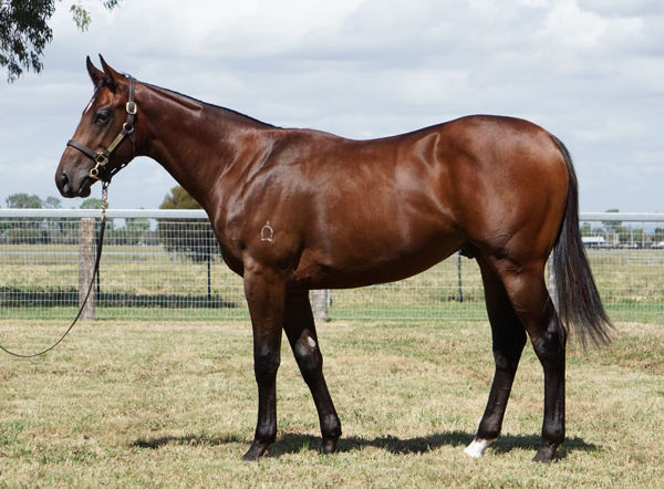 Lot 328, click to watch parade