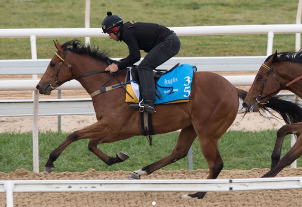 Lot 35 - click to watch him gallop.
