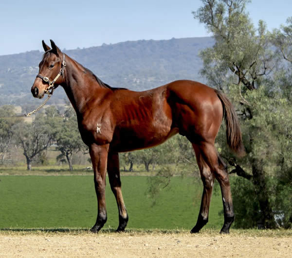 Lot 52 - click to see his page.