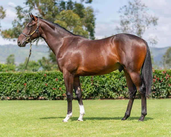 Lot 617 - click to see his page.