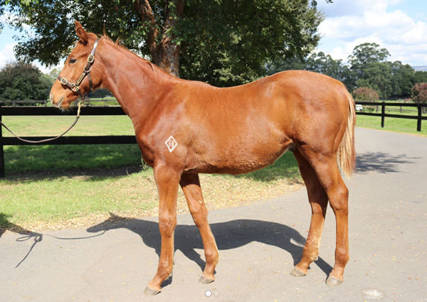 Lot 67 - click to see his page.