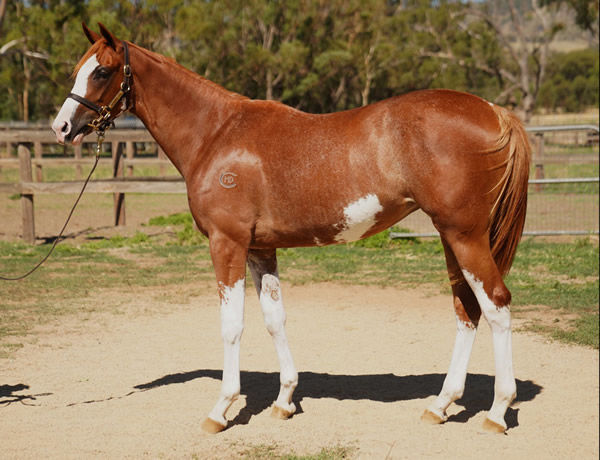 Lot 700 - click for her page.