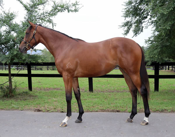 Lot 735 is a Foxwedge filly with plenty of pedigree upside