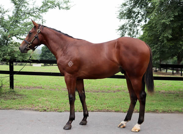 Lot 80 is bred on a Nick that Clicks!