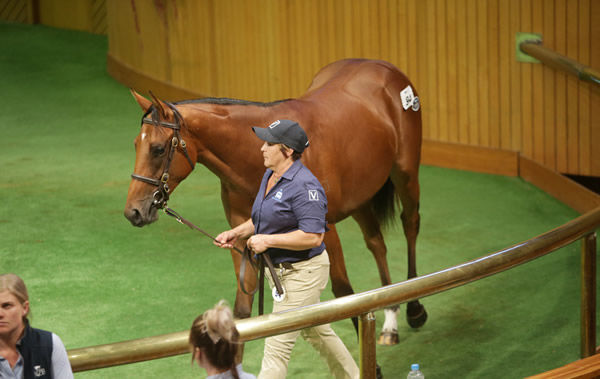 David Ellis went to $800,000 to secure lot 94. Photo: Trish Dunell