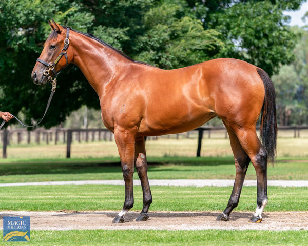 $975,000 I Am Invincible filly from Bonaria.