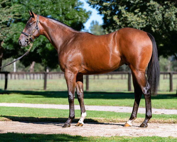 $1.25 million Zoustar colt from Lady Jivago