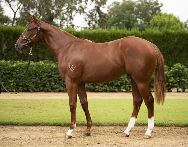 $1,050,000 Capitalist colt from Miss Interiors.
