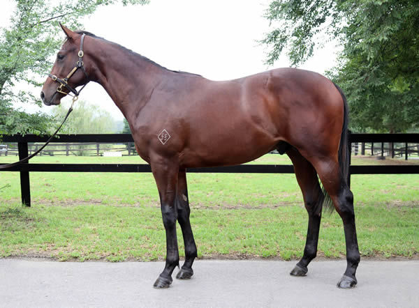 Lot 76 is from a half-sister to $1.2million earner Fiesta