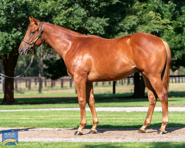 Compare the pair. Widden will offer this brother to Swift Witness at the Magic Millions
