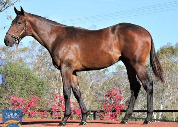 Luscinia was bred by Yulong, who have entered his weanling half-brother for Inglis Great Southern.