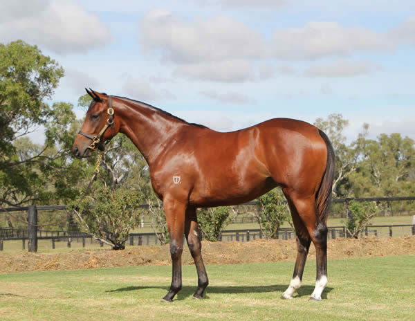 Madam Legend a $250,000 Inglis Easter yearling
