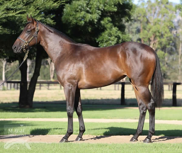 Madam Rouge as a yearling
