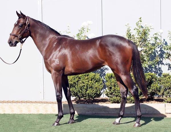 A $5,000 future Oaks winner at the Inglis Gold Melbourne Yearling Sale