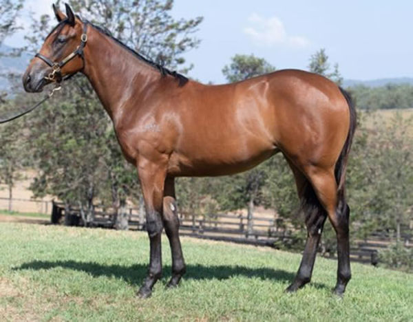 Mildred as a yearling