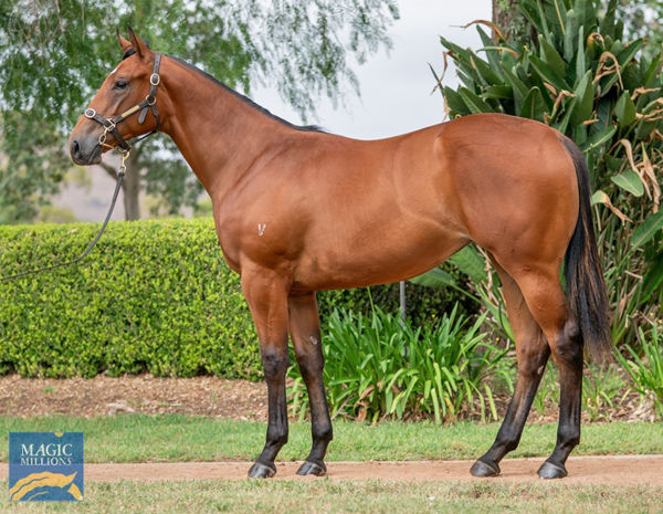 Miss Hipstar was a $150,000 Magic Millions Yearling