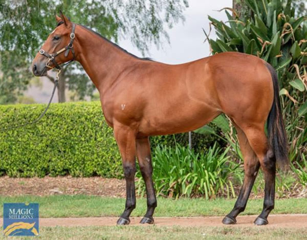 Miss Hipstar as a yearling.