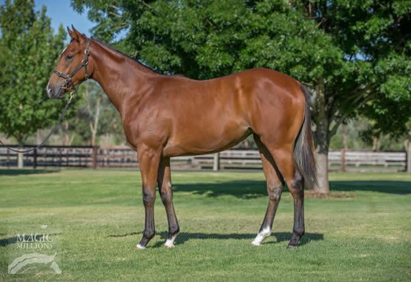 Missile Mantra was a $30,000 Magic Millions yearling