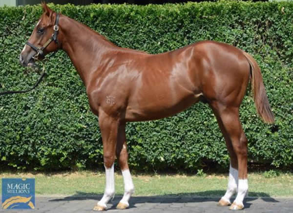 Montana Flash as a yearling