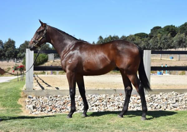 Mount Pleasant as a yearling