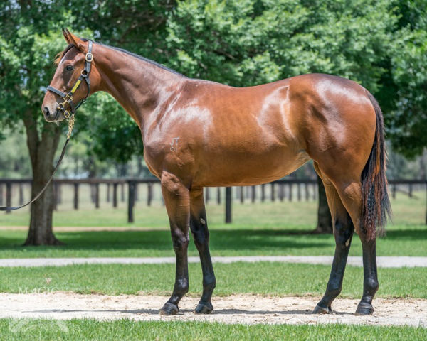 Mozzie Monster was a $150,000 Magic Millions yearling