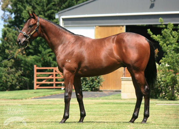 Mr Quickie a $115,000 Magic Millions yearling