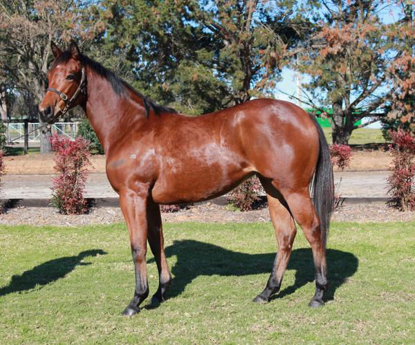 My Snow Queen a $15,000 Scone Yearling