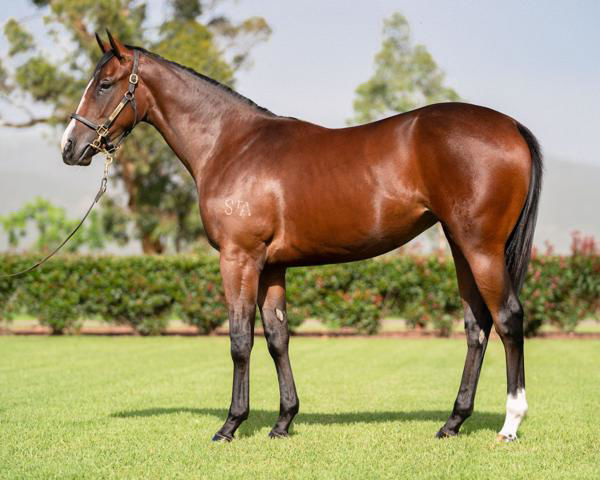 New York Baby a $75,000 Inglis Premier Yearling
