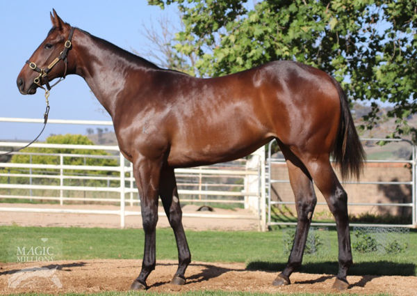 Odeum as a yearling
