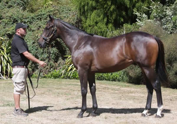 On the Bubbles as a yearling.
