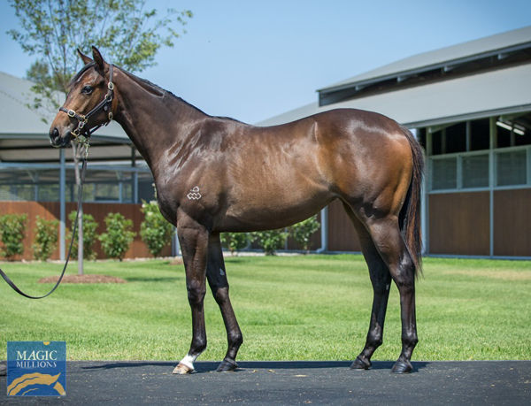 Oriental Princess a $150,000 Magic Millions yearling